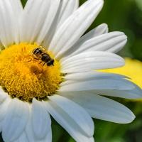 FOTD - December 9, 2018 - Daisy and Bee