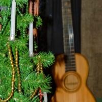 Sunday Trees – 369 - Christmas Trees
