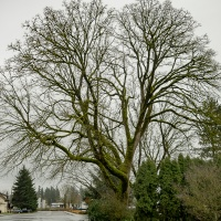 Sunday Trees – 375 - Winter trees