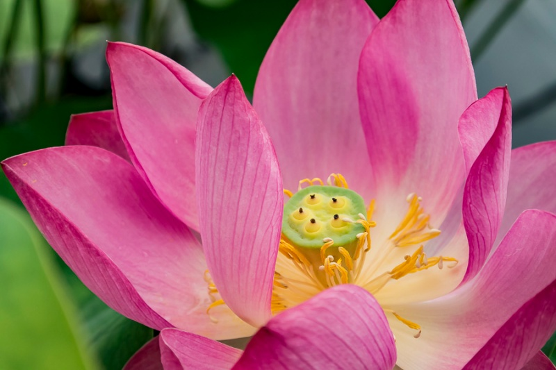Friendly Friday Colors And Letter Challenges Lotus Flowers