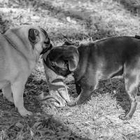 Cee's Black & White Photo Challenge: Open Topic