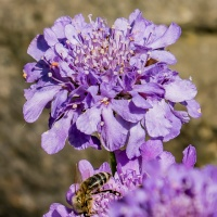 FOTD - June 16, 2019 - ... even a bee