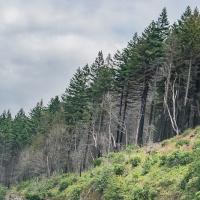 Sunday Trees – 397 - Wildfire Damage