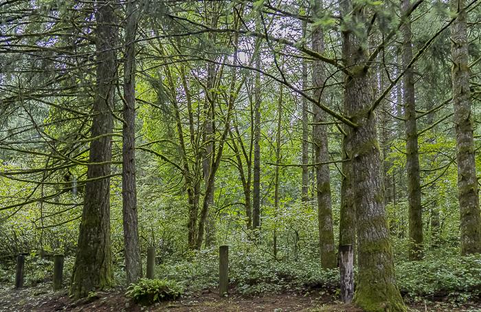#ThursdayTreeLove – 72 Challenge – Forest