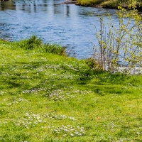 July 16 - Blue Squares - Flowing River in Springtime