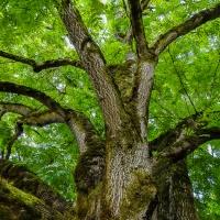 Cee's Fun Foto Challenge:  Trees