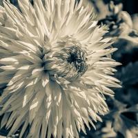 Cee's Black & White Photo Challenge: Take New Photos - Any topic