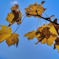 FOTD - September 16, 2019 - Autumn Leaves