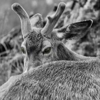 September 16 -  AOTD - Deer