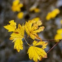 FOTD - September 19, 2019 - Autumn Leaves