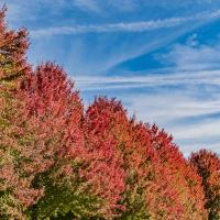 Sunday Trees – 413 & Festival of Leaves Week 4