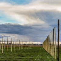 October 14 - Square&Lines  - Hops Fields