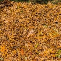 FOTD - October 18, 2019 - Autumn Leaves
