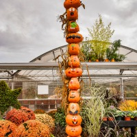FOTD - October 23, 2019 - Pumpkins and Mums