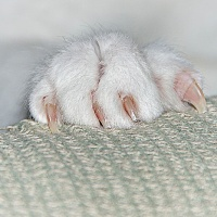 Sunshine's Macro Monday - Cats paw