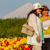 A Photo A Week Challenge:  Stylish (at the Tulip Farm)