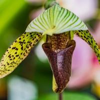 FOTD - February 26 - Orchid