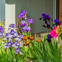 Tuesday Photo Challenge - Yard