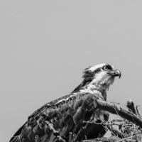 Cee's Black & White Photo Challenge:  Birds
