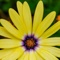 Friendly Friday Photo Challenges - Yellow