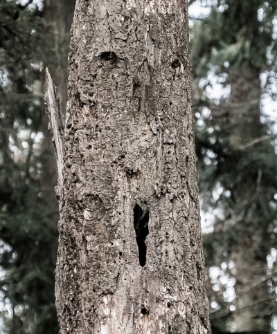 Face in a tree.
