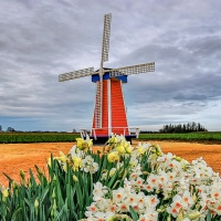 April 5 - #SquareTops - Windmills and Wind Turbines