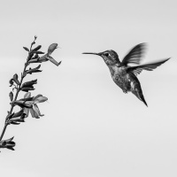 Cee's Black & White Photo Challenge:   It's All About Nature