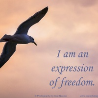 Six Word:  I am an expression of freedom
