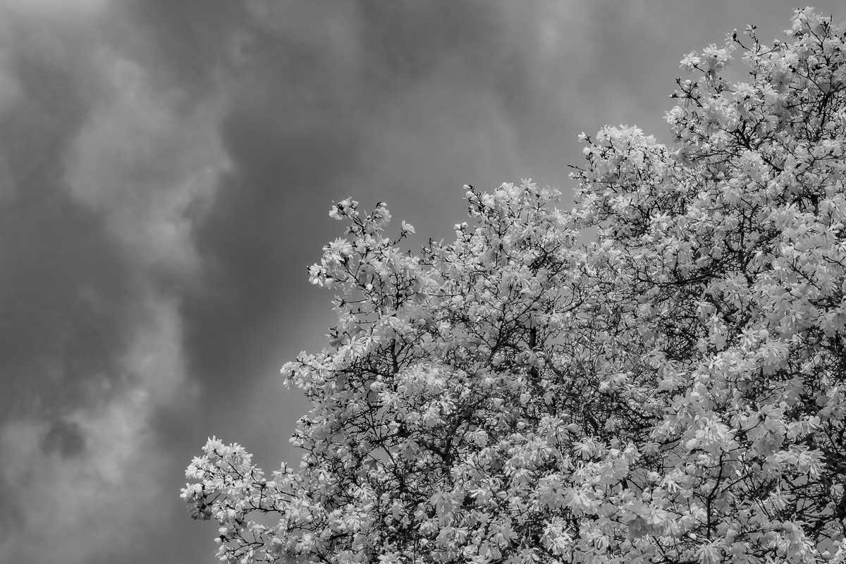 Cosmic Photo Prompt – Shades of Gray/Grey