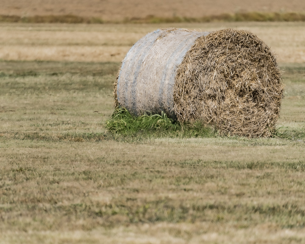 June 15 – Photo a Day and Colors and Letters – Waves and Dry Grass Color