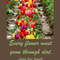 Pick Me Up:  Every flower must grow through dirt