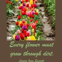 Pick Me Up:  Every flower must grow through dirt