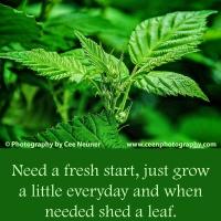 Pick Me Up:  Need a fresh start ...