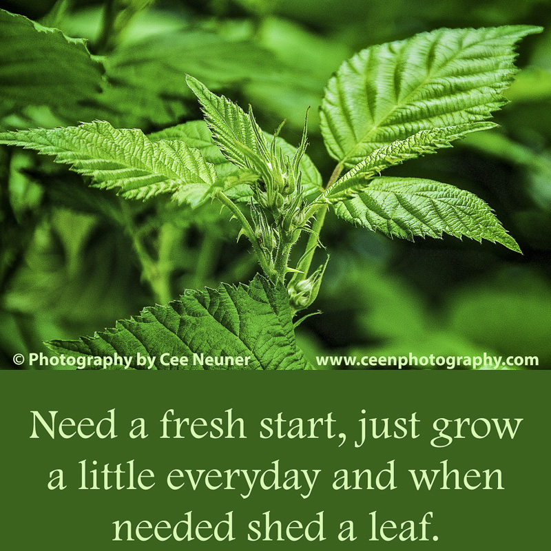 Cee Neuner, Pick Me Up, Quote, Inspirational, green leaf, motivate, Need a fresh start, just grow a little everyday and when needed shed a leaf