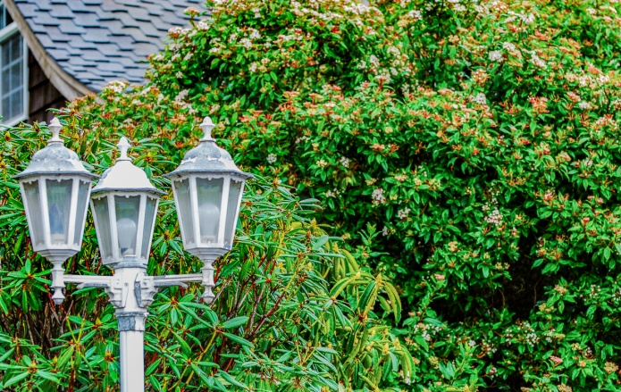 Lamp Post with rhododendron in background.