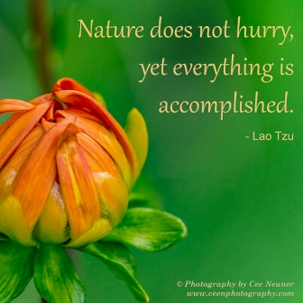 ceenphotography.com, pick me up, inspire, uplift, motivate, photography, Cee Neuner, dahlia, bud, green, orange, Loa Tzu