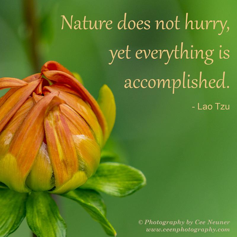 ceenphotography.com, pick me up, inspire, uplift, motivate, photography, Cee Neuner, dahlia, bud, green, orange, Loa Tzu