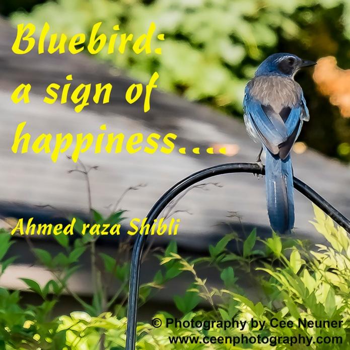 five word, Bluebird a sign of happiness, Ahmed raza Shibli, ceenphotography.com, pick me up, inspire, uplift, motivate, photography, Cee Neuner, happy,