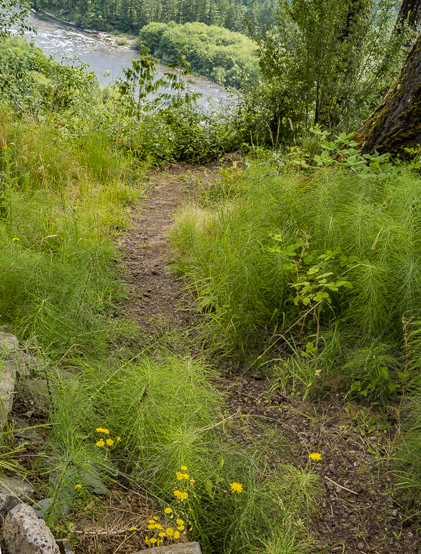 Which Way Photo Challenge – Week of July 17 – Milo McIver State Park