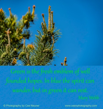 Green is the fresh emblem of well founded hopes,In blue the spirit can wander, but in green it can rest, Mary Webb,ceenphotography.com, pick me up, inspire, uplift, motivate, photography, Cee Neuner, blue, green, tree, sky