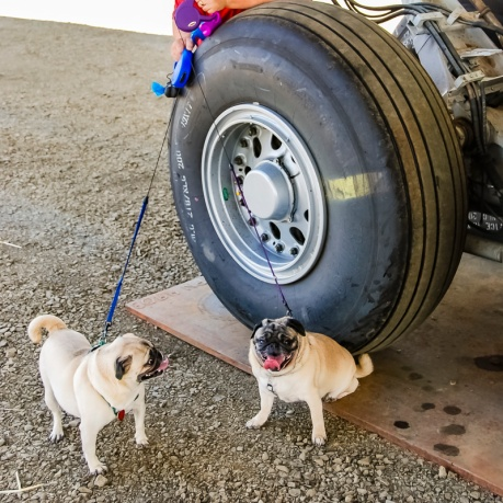 Chris is standing being one of the landing tires and the pugs are MacKenzie (left) and Shadow (right).