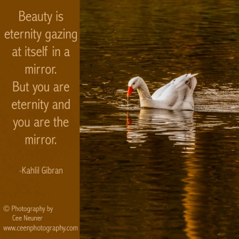 Beauty is eternity gazing at itself in a mirror, but you are the eternity and you are the mirror, Kahlil Gibran, ceenphotography.com, pick me up, inspire, uplift, motivate, photography, Cee Neuner, goose, water, gold, reflection