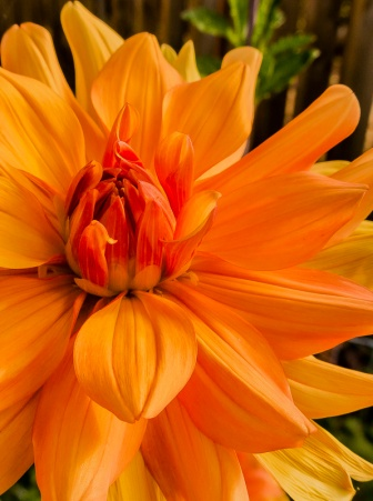ceenphotography.com, FOTD, flower of the day, Cee Neuner, photography, orange, close up