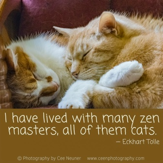 I have lived with many zen masters, all of them cats, Elkhart Tolle, pick me up, inspire, uplift, motivate, photography, Cee Neuner, ceenphotography.com,