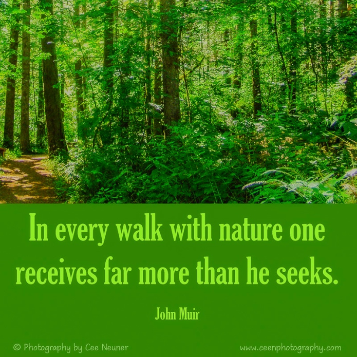 In every walk with nature one receives far more than he seeks, John Muir, inspire, uplift, motivate, photography, Cee Neuner, ceenphotography.com, forest, green