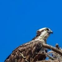 Bird Weekly - Photo Challenge - Birds of Prey