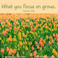 Pick Me Up:  What you focus on grows