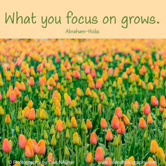 what you focus on grows, Abraham Hicks, uplift, motivate, photography, Cee Neuner, ceenphotography.com, tulip field, orange, green