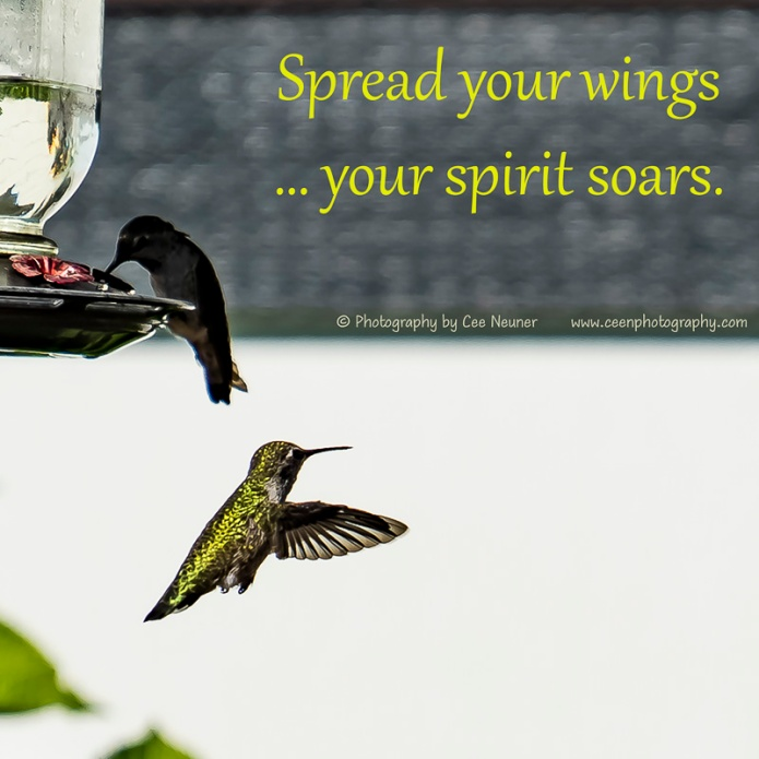 Spread your wings …your spirit soars., uplift, motivate, photography, Cee Neuner, ceenphotography.com, hummingbird