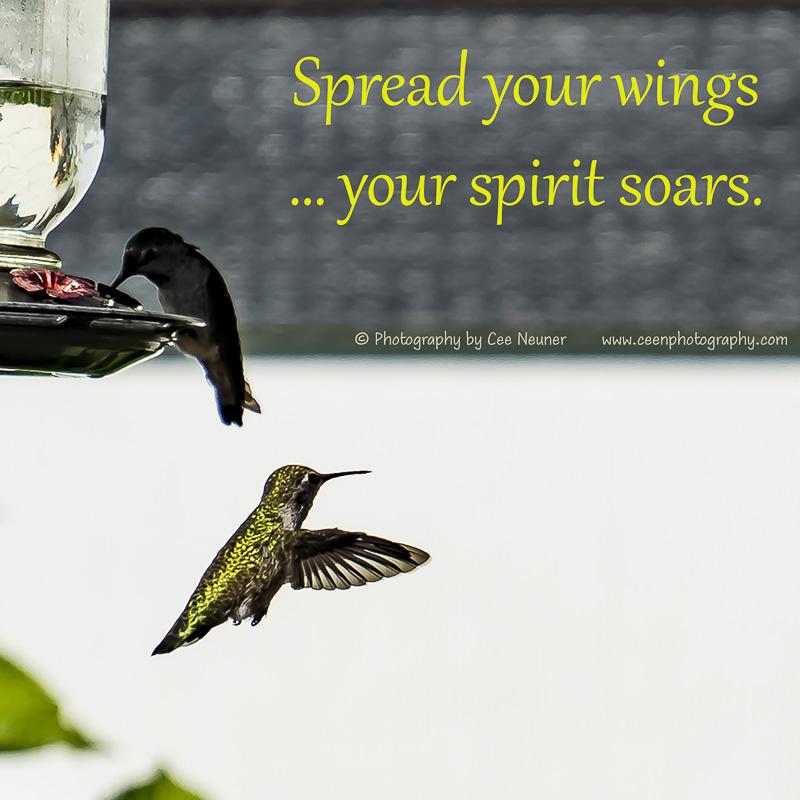 Spread your wings …your spirit soars., uplift, motivate, photography, Cee Neuner, ceenphotography.com, hummingbird